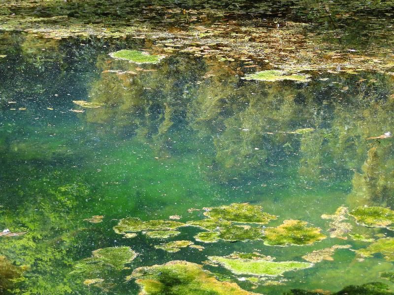 Sidst i juni 2011 var der Sommercamp - maleri, hvor vi var ude ved Troldesøen for at male i og med naturens materialer. Der var masser af inspiration til alle.